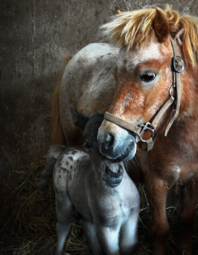 Horse-with-Mother